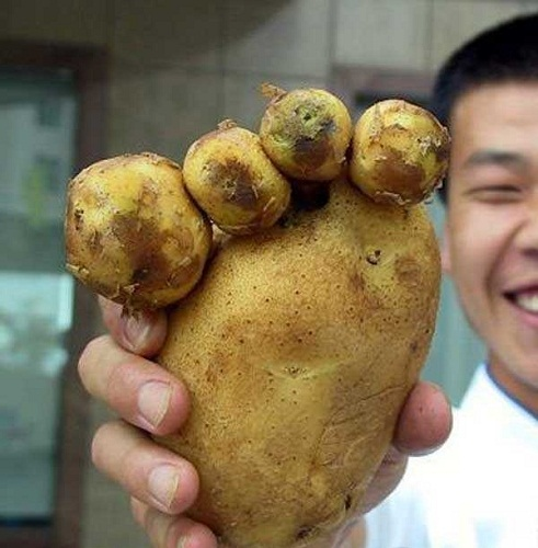 funny-potato-food-amazing-pics-photos-blog-bajiroo-fun-images-1